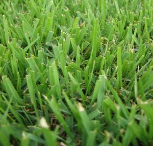 Our Frisco Sprinkler Repair team suggests planting buffalo grass to save on watering costs